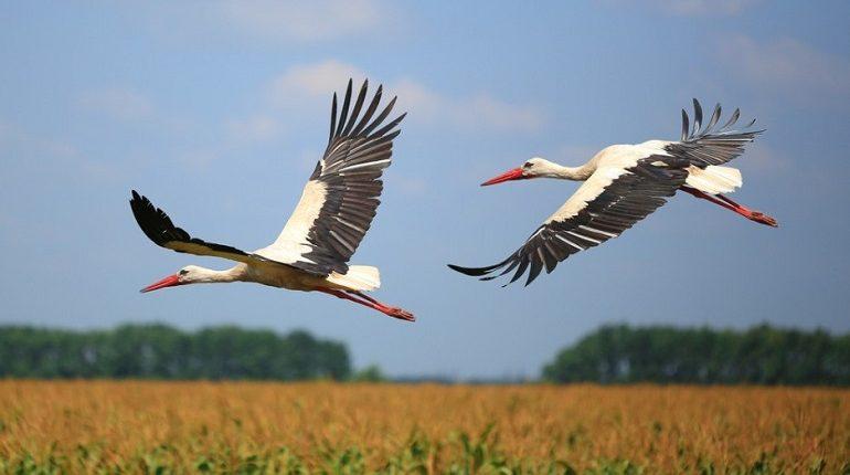 Jakie Ptaki Przylatują Do Polski Na Wiosnę
